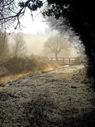11th Jan 2021 - Frosty morning in the marsh