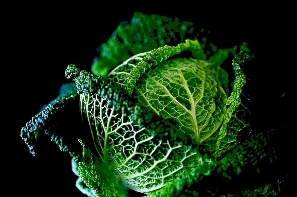 Savoy Cabbage by carole_sandford
