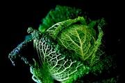 11th Jan 2021 - Savoy Cabbage