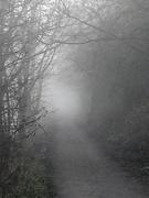 8th Jan 2021 - Misty