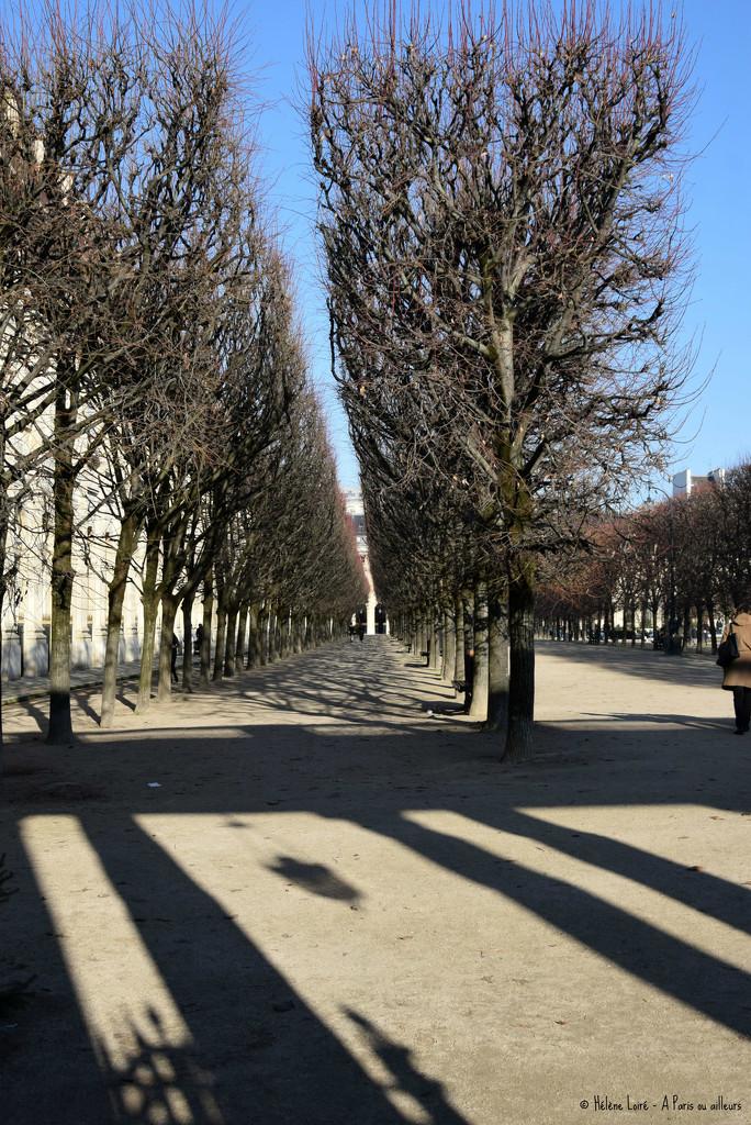 jardin Palais Royal by parisouailleurs
