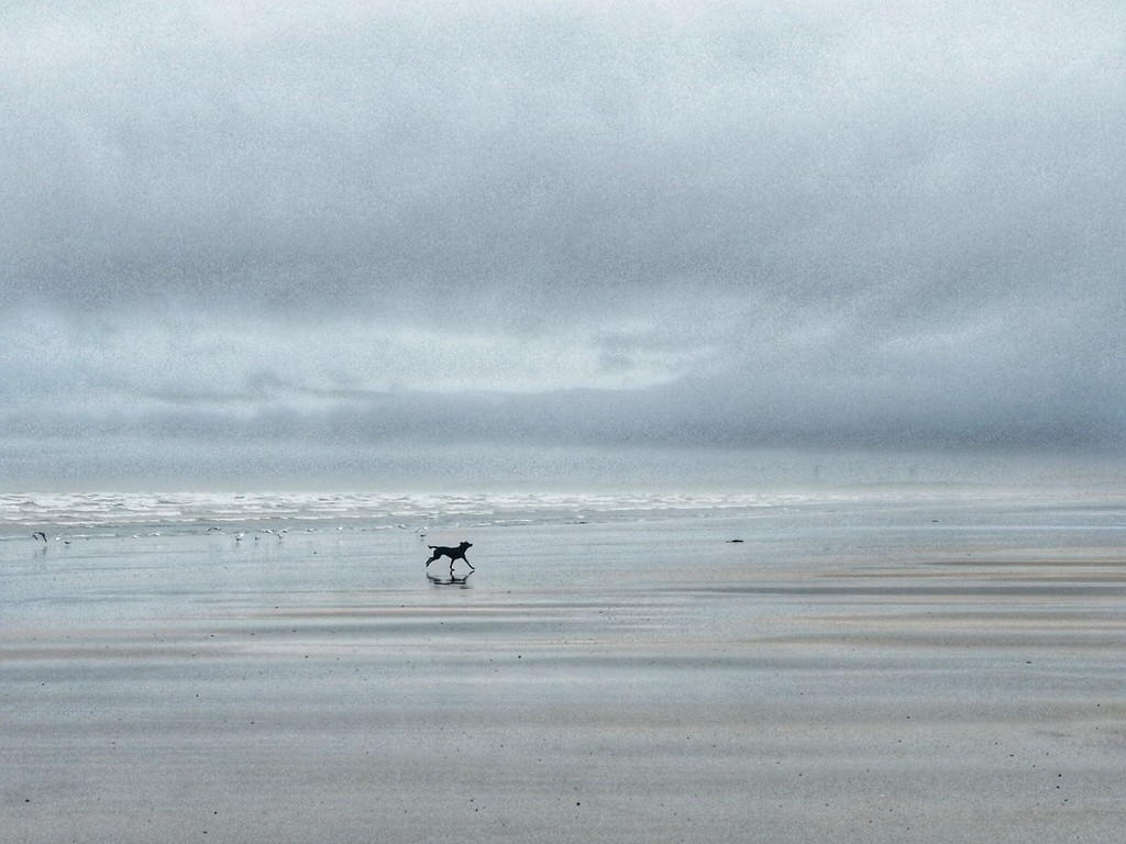 A Run On The Beach  by motherjane
