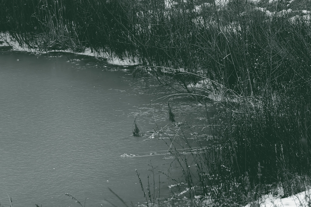 Along the Bank by ginnys