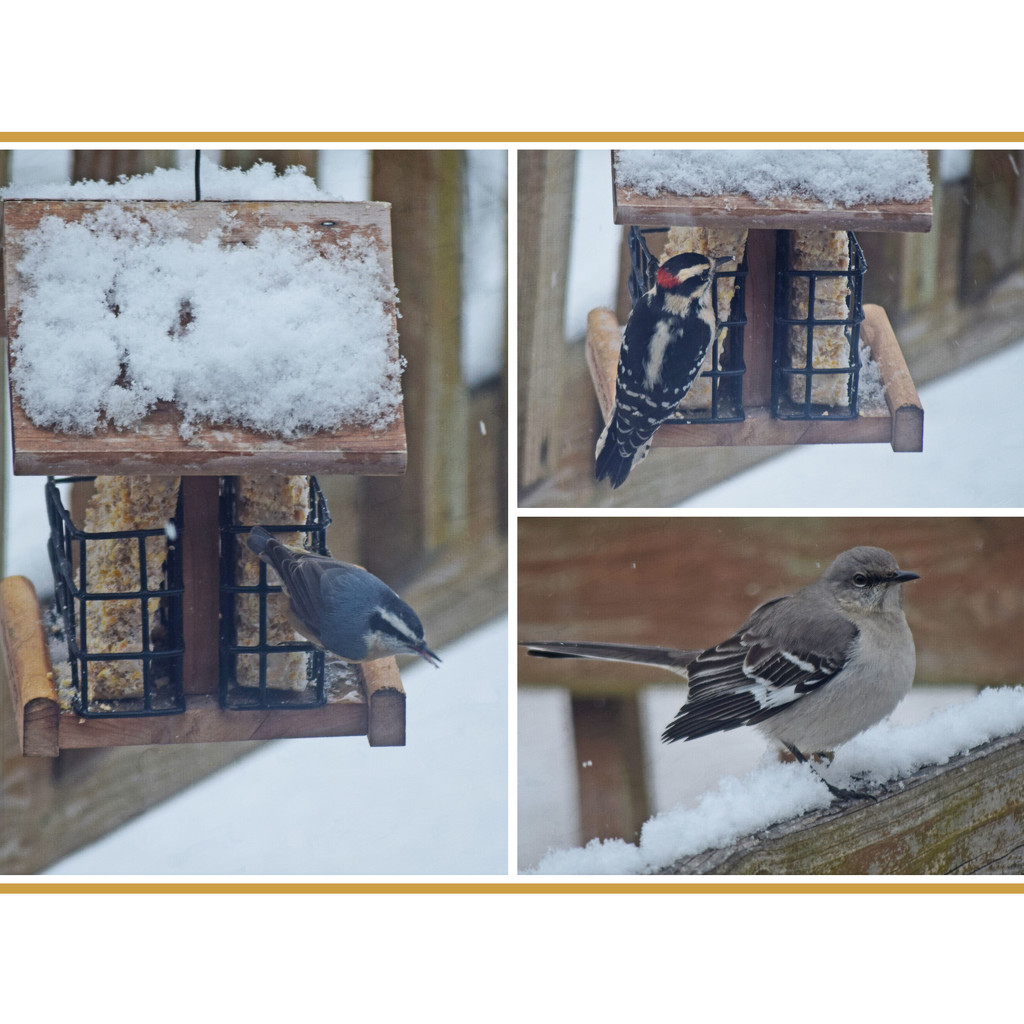 Backyard Birds in Snow by dsp2