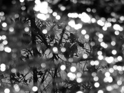 12th Jan 2021 - Reflections in a fresh rain puddle...