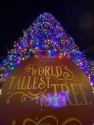 23rd Dec 2020 - The World's Tallest Tree