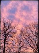 11th Jan 2021 - Trees & Sky