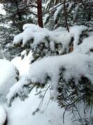 11th Jan 2021 - Snow