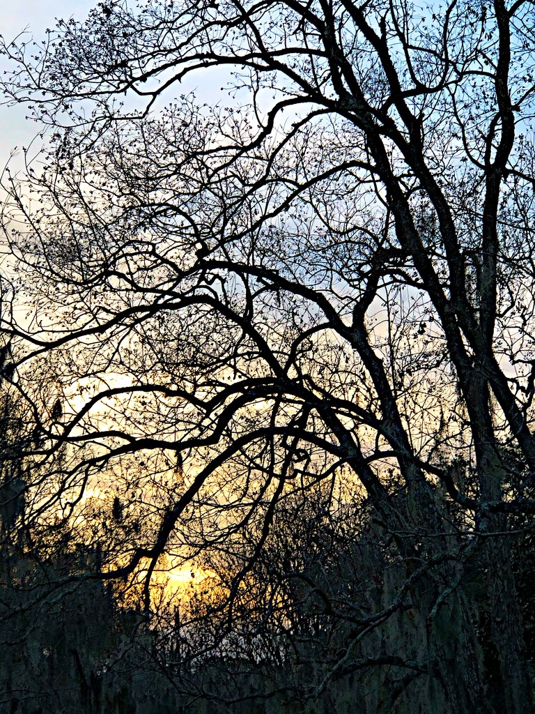 Winter trees and sunset by congaree
