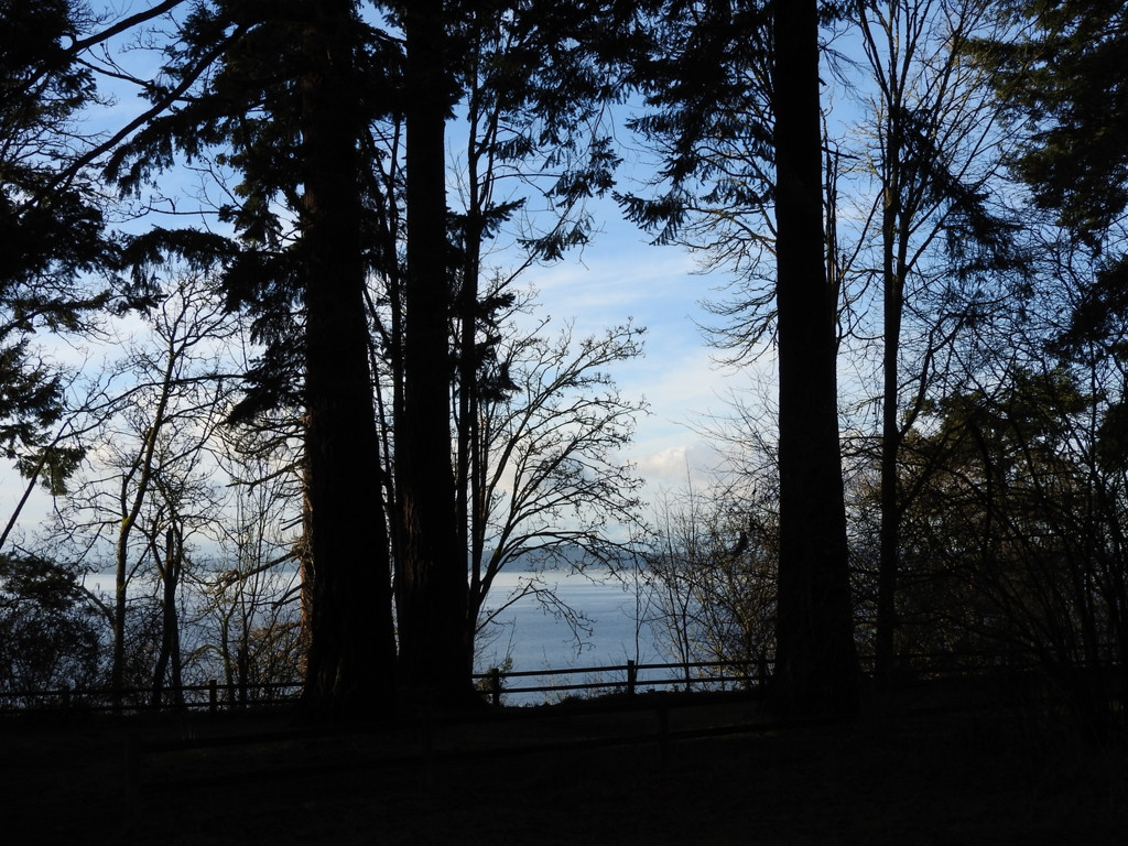 Seeing Through The Trees by seattlite