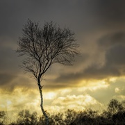 12th Jan 2021 - Lone tree
