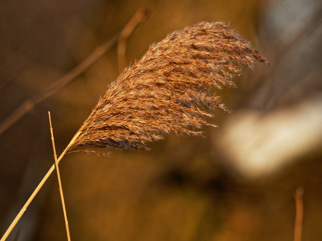 reed by rminer