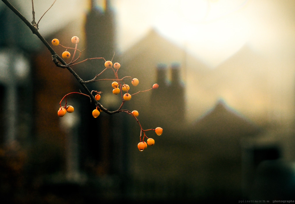 double chimneys by pistache
