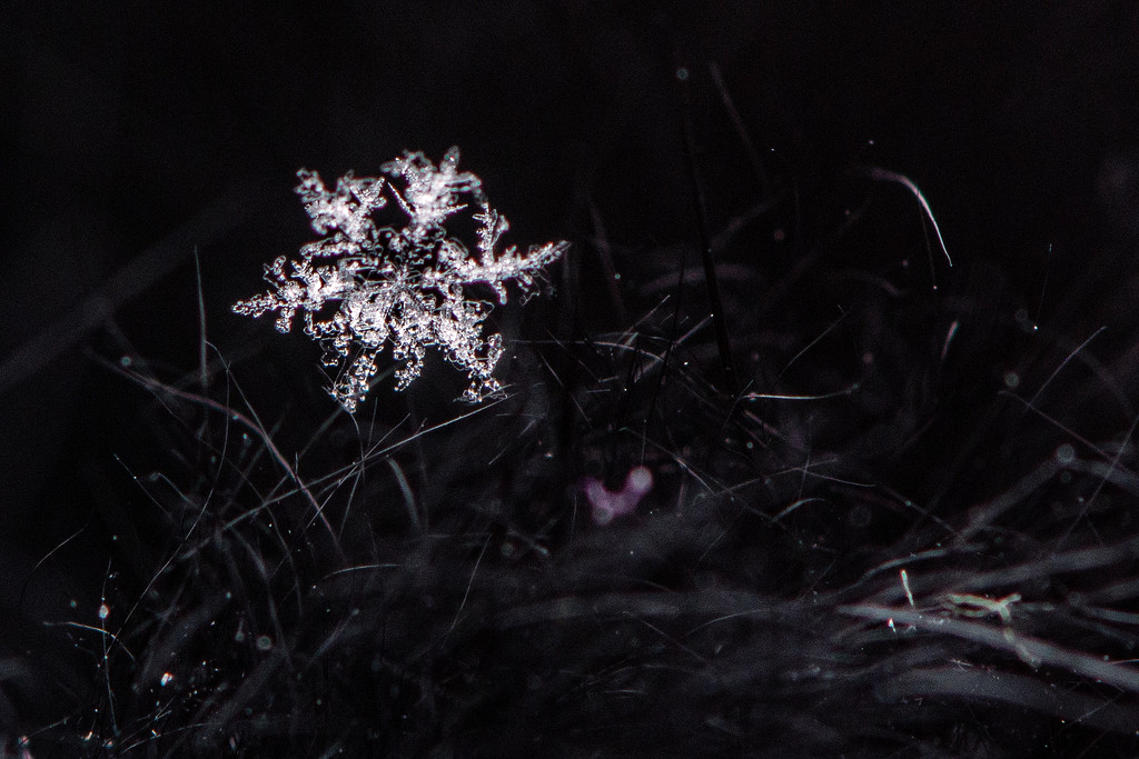 Snow Flake - the ones that fall from the sky ... by farmreporter