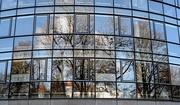 12th Jan 2021 - Framed Trees