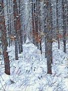 12th Jan 2021 - Snowshoe trail