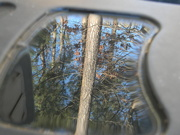 12th Jan 2021 - Water Reflection