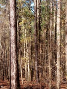 13th Jan 2021 - Winter woods...