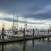 Steveston Harbour by cdcook48