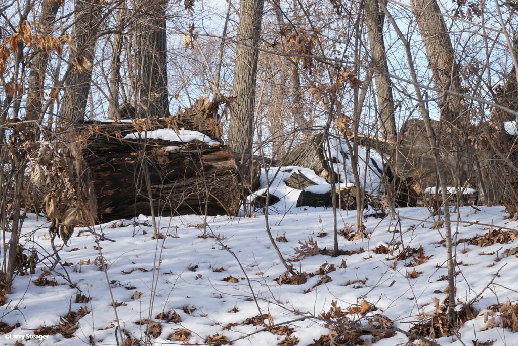 Snow on a log by larrysphotos