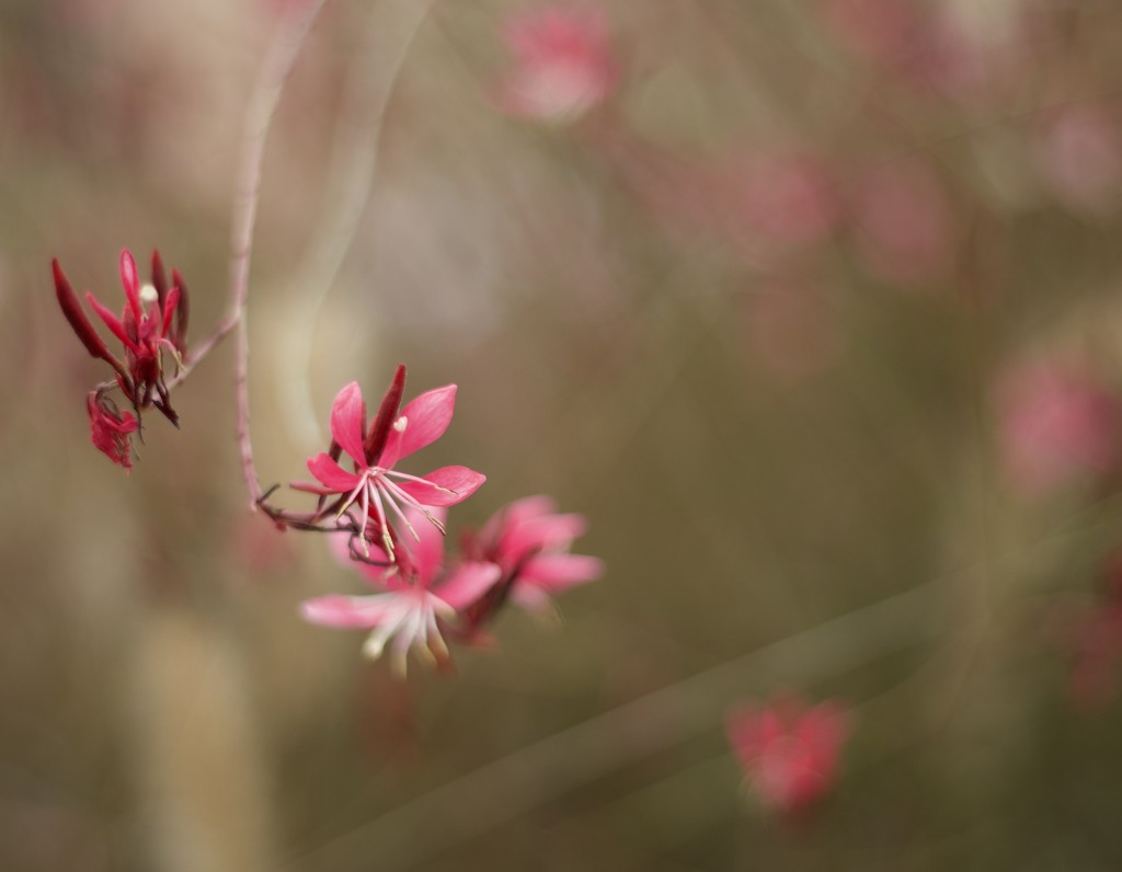Flower by gapandgain