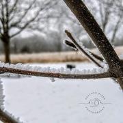 9th Jan 2021 - Rime frost