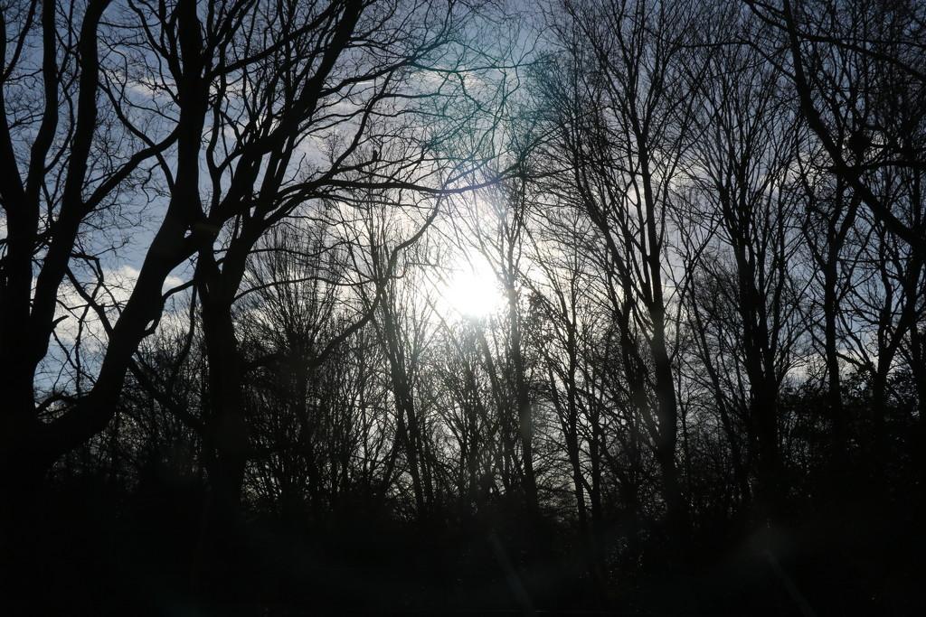 7. Sun by momamo