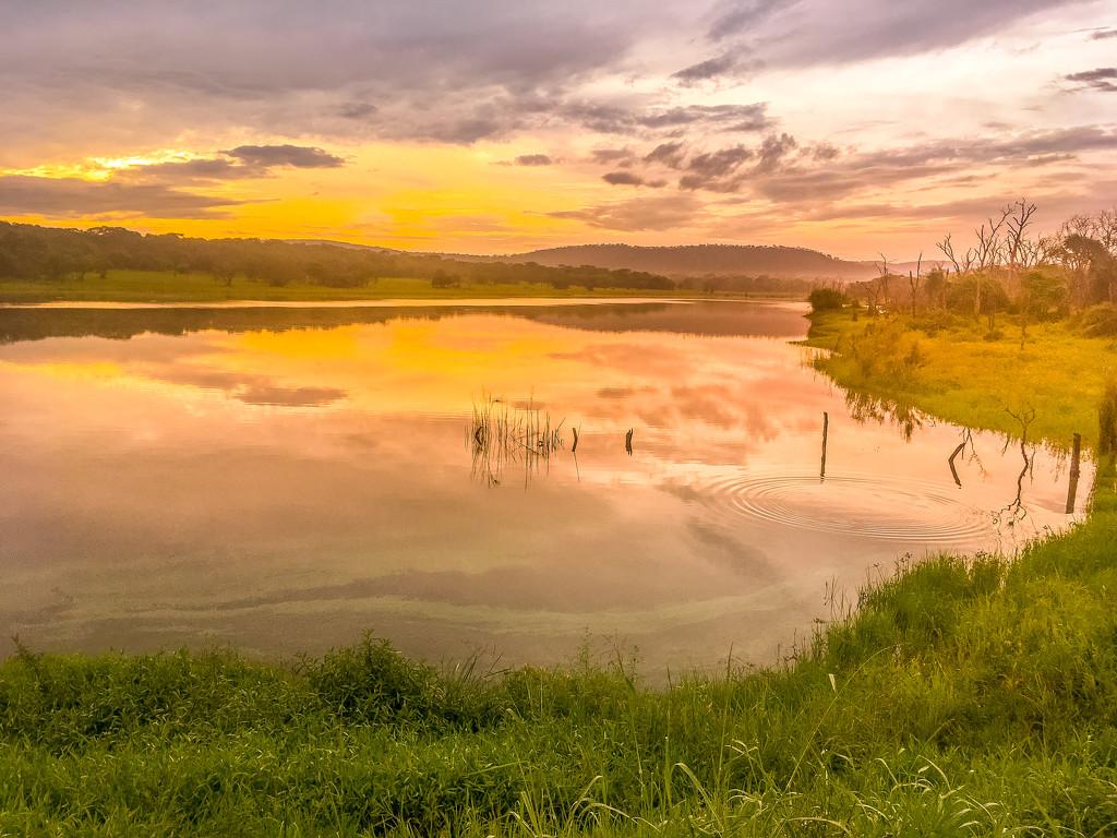 A Pretty Morning by zambianlass