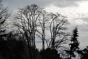 13th Jan 2021 - Tree Silhouettes