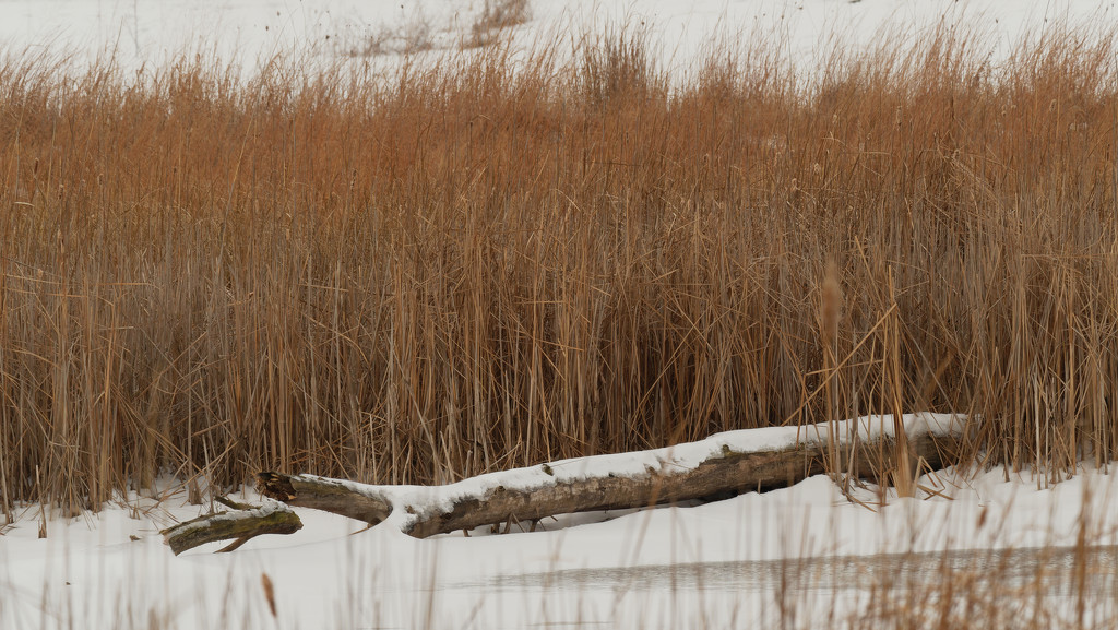 snow log by rminer