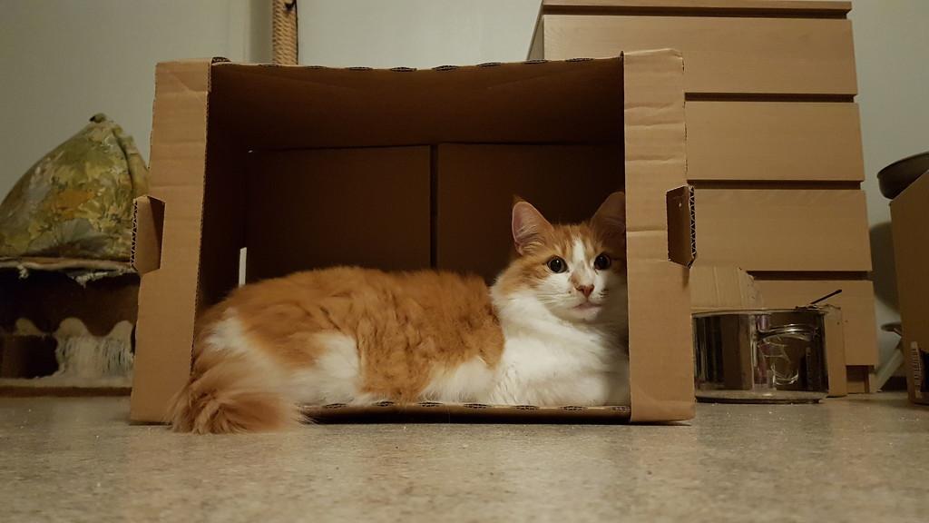 Box owner  by katriak
