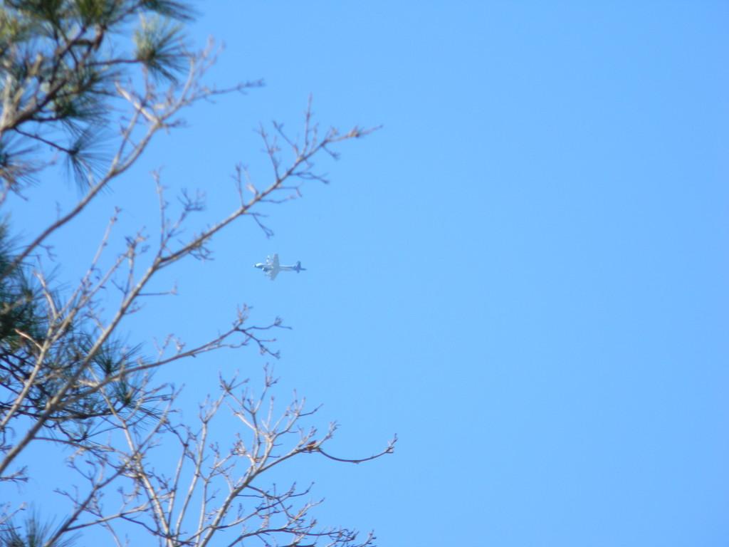 Airplane Headed Into Tree by sfeldphotos