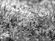 14th Jan 2021 - Fresh growth on the star moss...