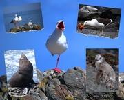 12th Jan 2021 - NZ Wildlife