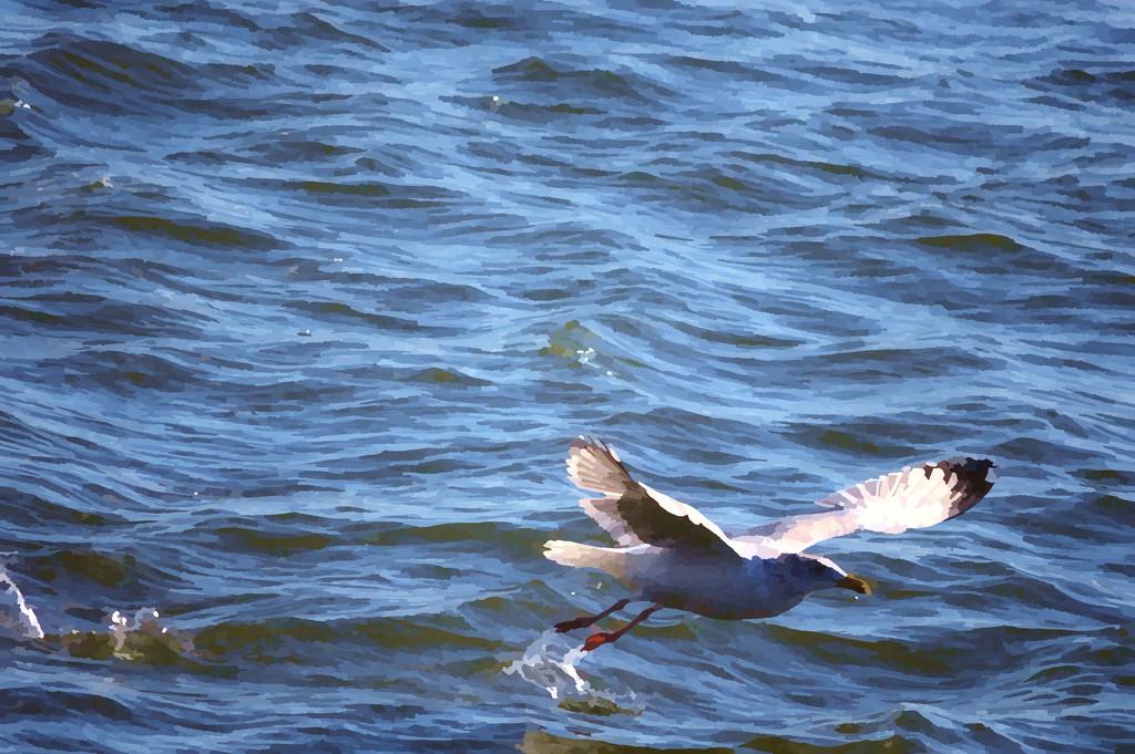 fleeing bird by francoise