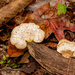 Fungi on the Log!