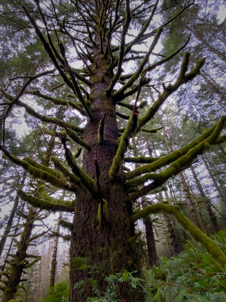 Moss Branches by jgpittenger