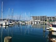 14th Jan 2021 - Wellington on a good day