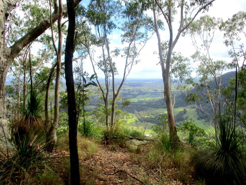 Typical Queensland bush scene by 777margo