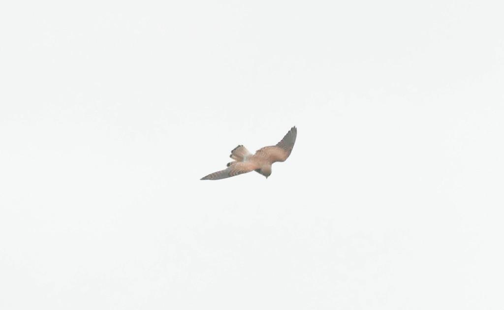 Bird in flight by stiggle