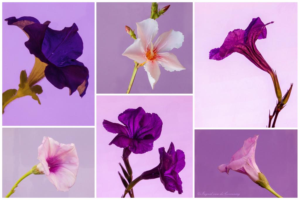 Purples by ingrid01