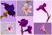 14th Jan 2021 - Purples