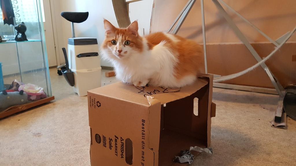 Box ruler  by katriak