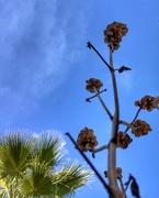14th Jan 2021 - The basil flower head bird buffet