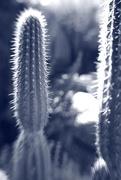 14th Jan 2021 - cactus