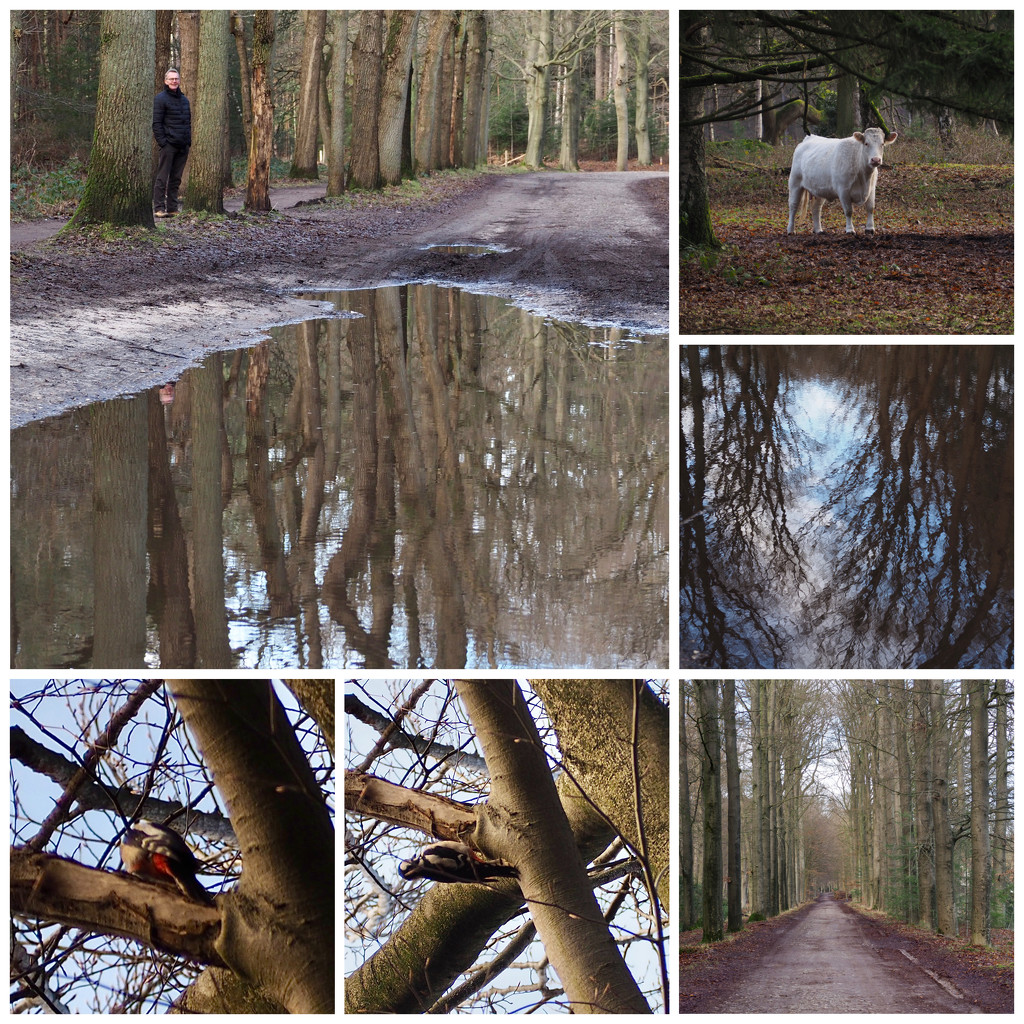 Another walk in the woods by jacqbb