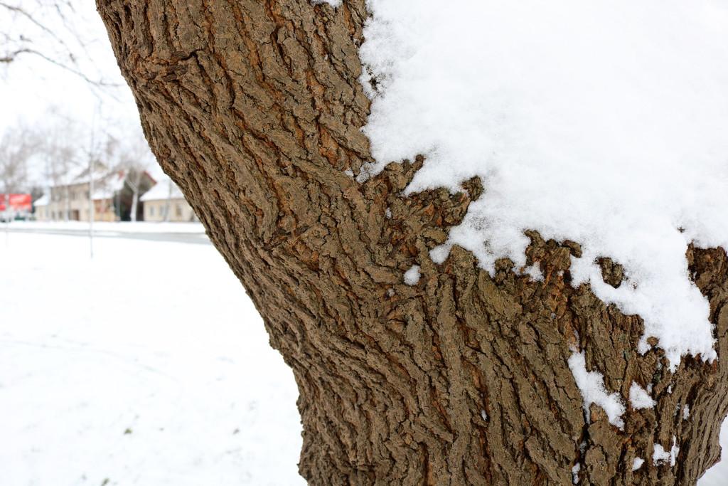 Sníh na stromě by petrv0