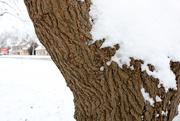 14th Jan 2021 - Sníh na stromě