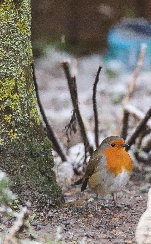 Rocking Robin by phil_sandford