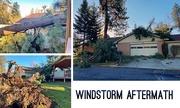 13th Jan 2021 - Windstorm